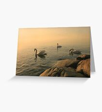 A Trio Of Swans At Sunrise Greeting Card