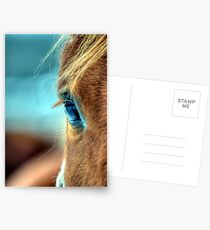 Horse Eye Postcards