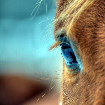 Horse Eye by fotokmcc