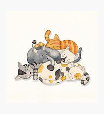 Cat Nap (Siesta Time) Photographic Print