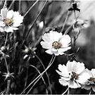 Muted Spring by Carolyn Staut