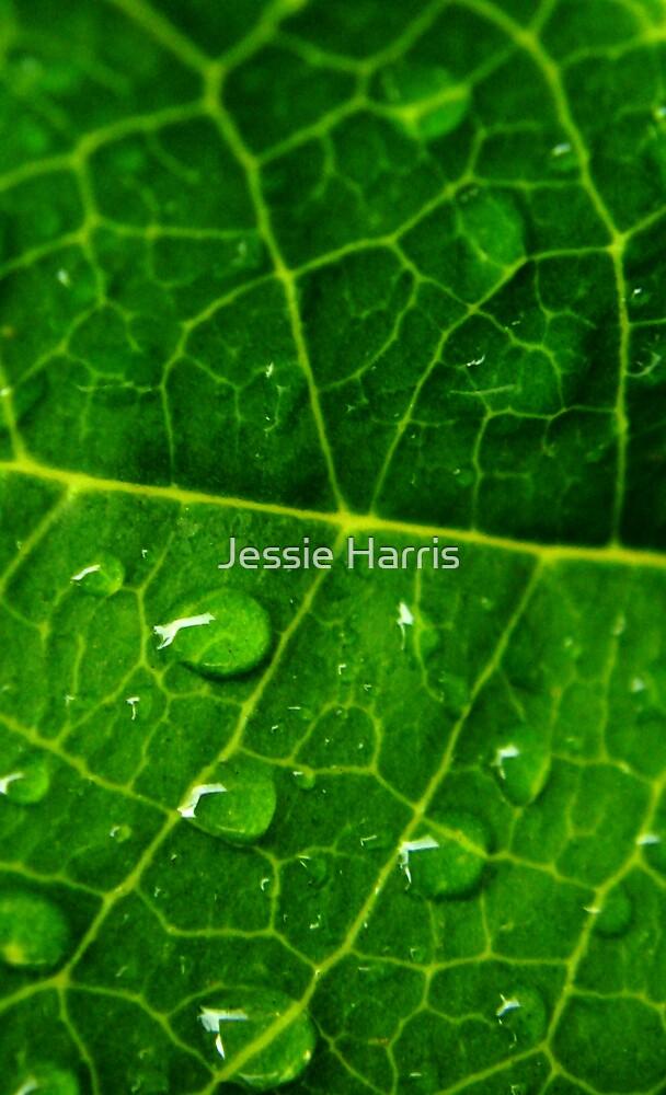 Droplets by Jessie Harris