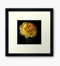 Peony Flower Framed Print