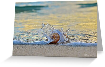 Splish Splash   by Deborah V Townsend