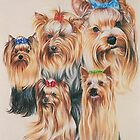 Yorkshire Terrier by BarbBarcikKeith