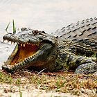 Crocodile for breakfast by Sheila Smith