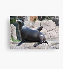 Funny Mama and Baby Sea Lions Canvas Print