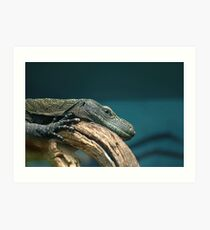 Lizard at Rest Art Print