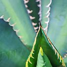 Euphorbia Euphoria by alan shapiro