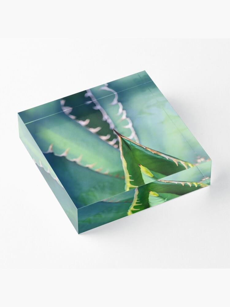 Alternative Ansicht von Euphorbia Euphorie Acrylblock