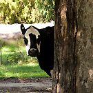 Cow by Rosina  Lamberti
