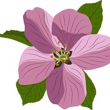 Apple Flower by brilliantbotany