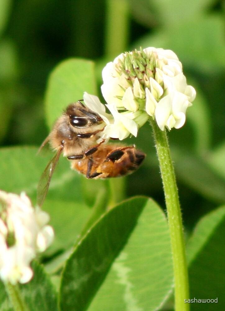 Happy Bee! by sashawood