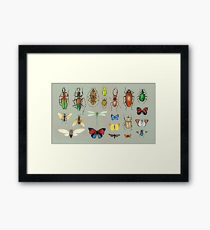 The Usual Suspects - Insects on grey Framed Print