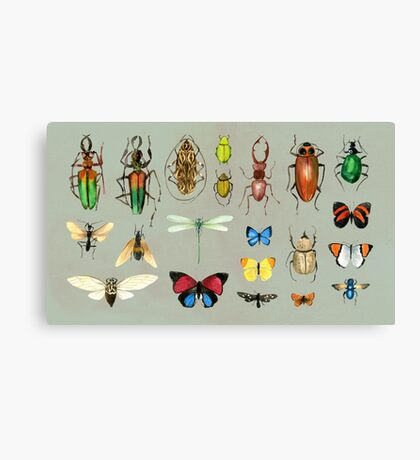 The Usual Suspects - Insects on grey Canvas Print