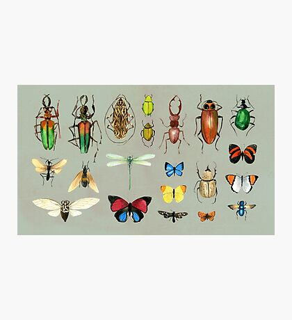 The Usual Suspects - Insects on grey - watercolour bugs pattern by Cecca Designs Photographic Print