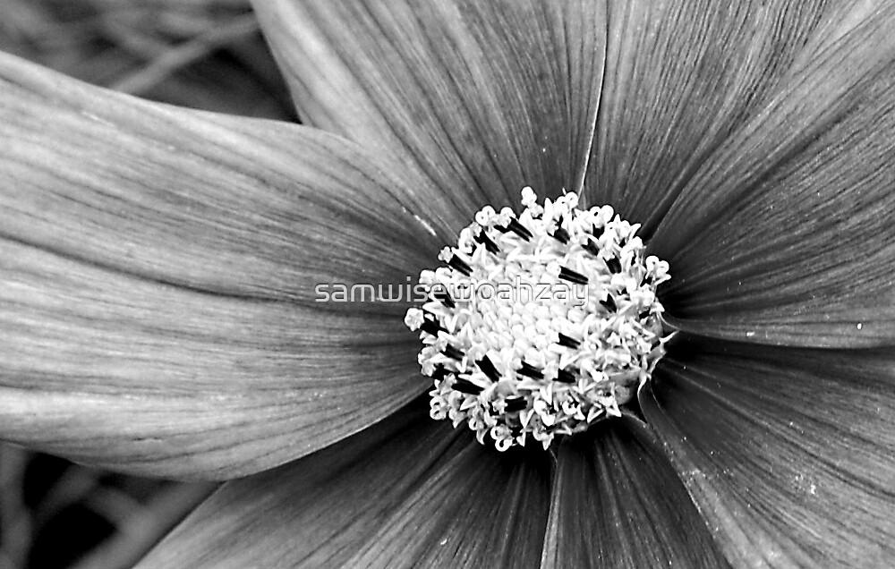 Flower by samwisewoahzay