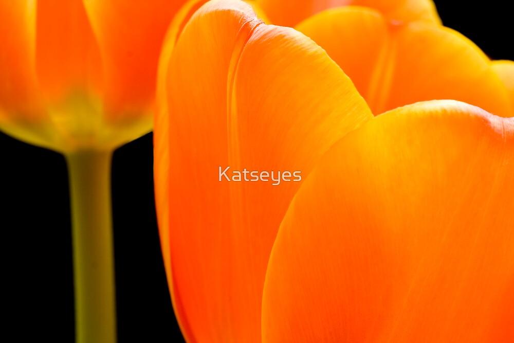 ORANGE BEAUTY by Katseyes