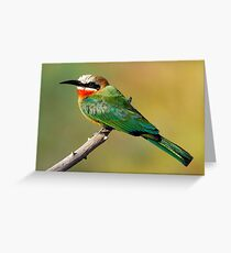 Whitefronted Bee-eater Perching Greeting Card