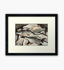 roach successful fishing Framed Print