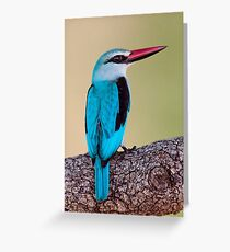 Woodland Kingfisher, South Africa Greeting Card