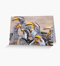 Yellow-billed Hornbills, South Africa Greeting Card