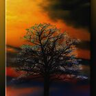 Tree at Sunset by Sheryl Gerhard