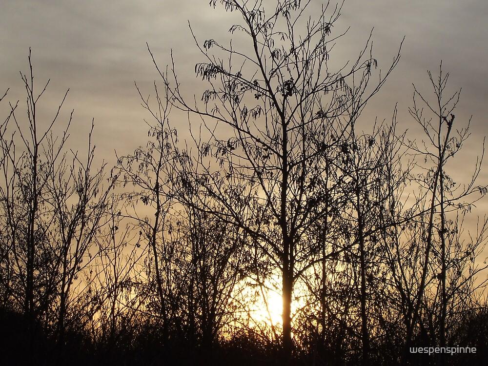 sunset3 by wespenspinne