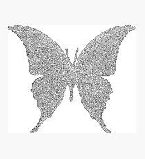 butterfly shaped labyrinth Photographic Print