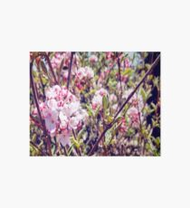 Counting Cheerful Cherry Blossoms Art Board