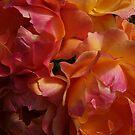 Heavenly Roses by irisdesign