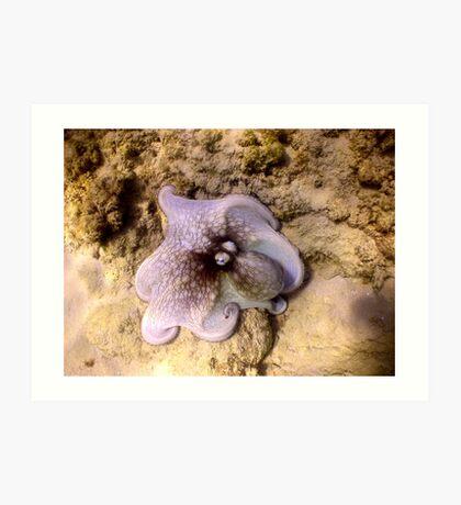 octopus color Art Print