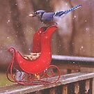 Winter Blue Jay #1 by Pat Abbott