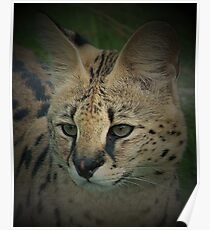 serval Poster