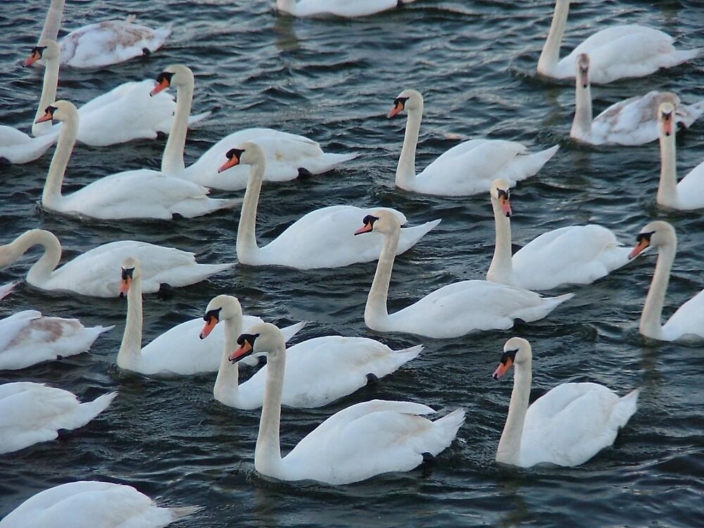 Swan Lake by Mark  O'Mahony