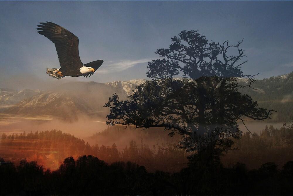 night eagle by carpman1611
