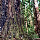 Henry Cowell - Redwoods by John Heywood
