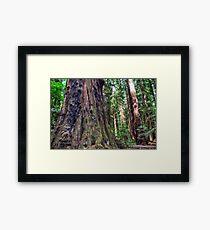 Henry Cowell - Redwoods Framed Print