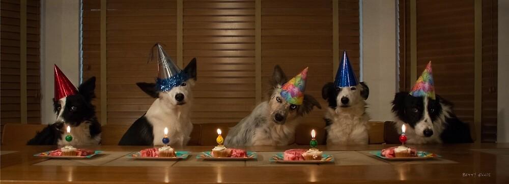 happy birthday 2 by Texas Sheepdogs