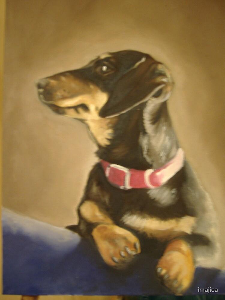 """""""beau"""" pet portrait by imajica"""