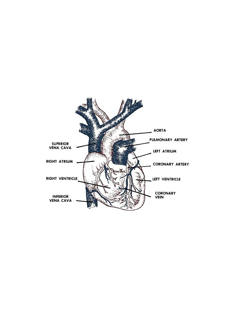 Cardio in Farbe von dillonchr