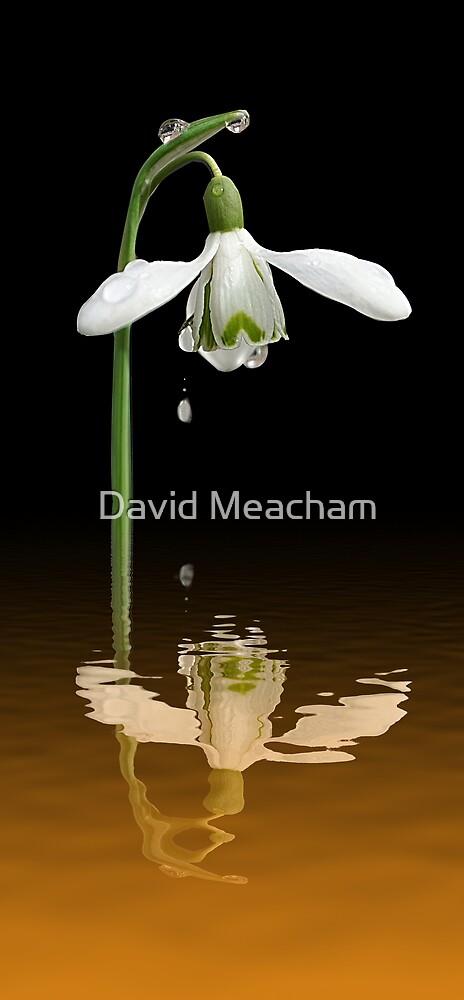 Double Diamond by David Meacham