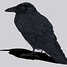 Raven Shadow by Signe Nordin