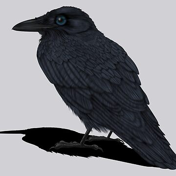 Raven Shadow by SigneNordin