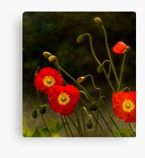 Yang Poppies Canvas Print