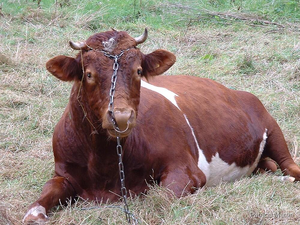 Bull by Patricia Martin
