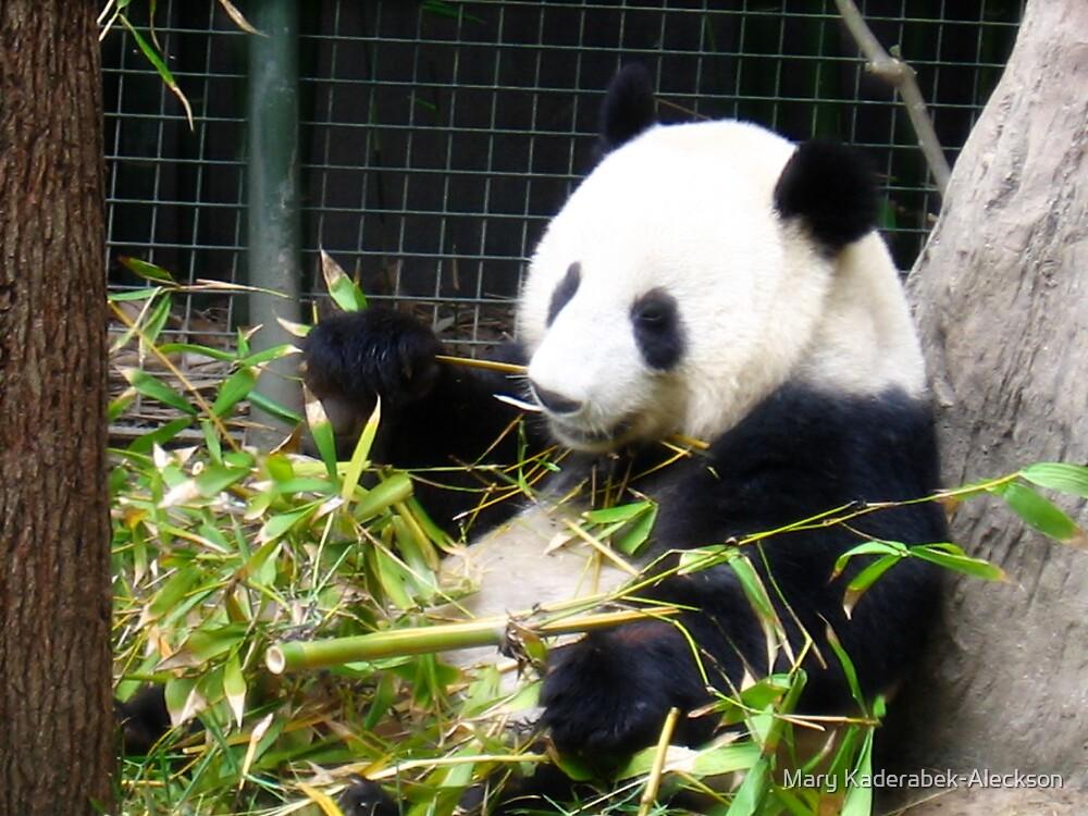 Panda Bear by Mary Kaderabek-Aleckson