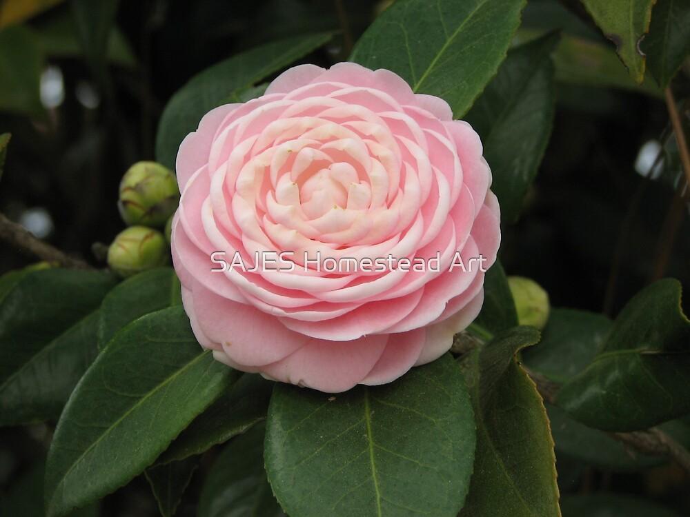 Alabama Flower by Sue Thompson