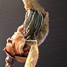 Pignut #2 . . . a stunted life by evon ski