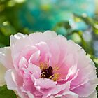 Peony in the Garden by Tracy Riddell